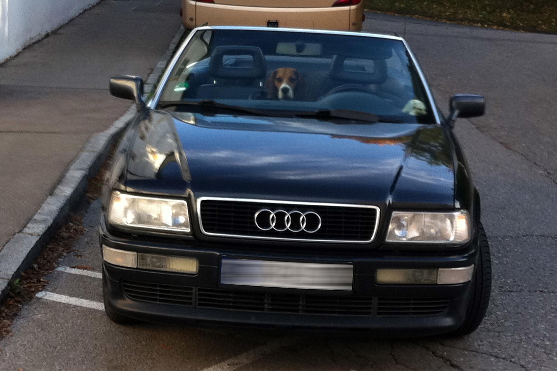 Audi Kabriolet mit Hund