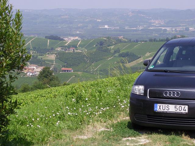 Wein- und Haselnussplantagen bei Alba/Italien