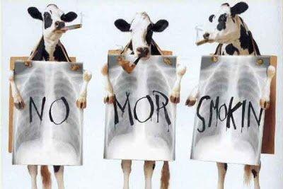 smoking_cows.jpg